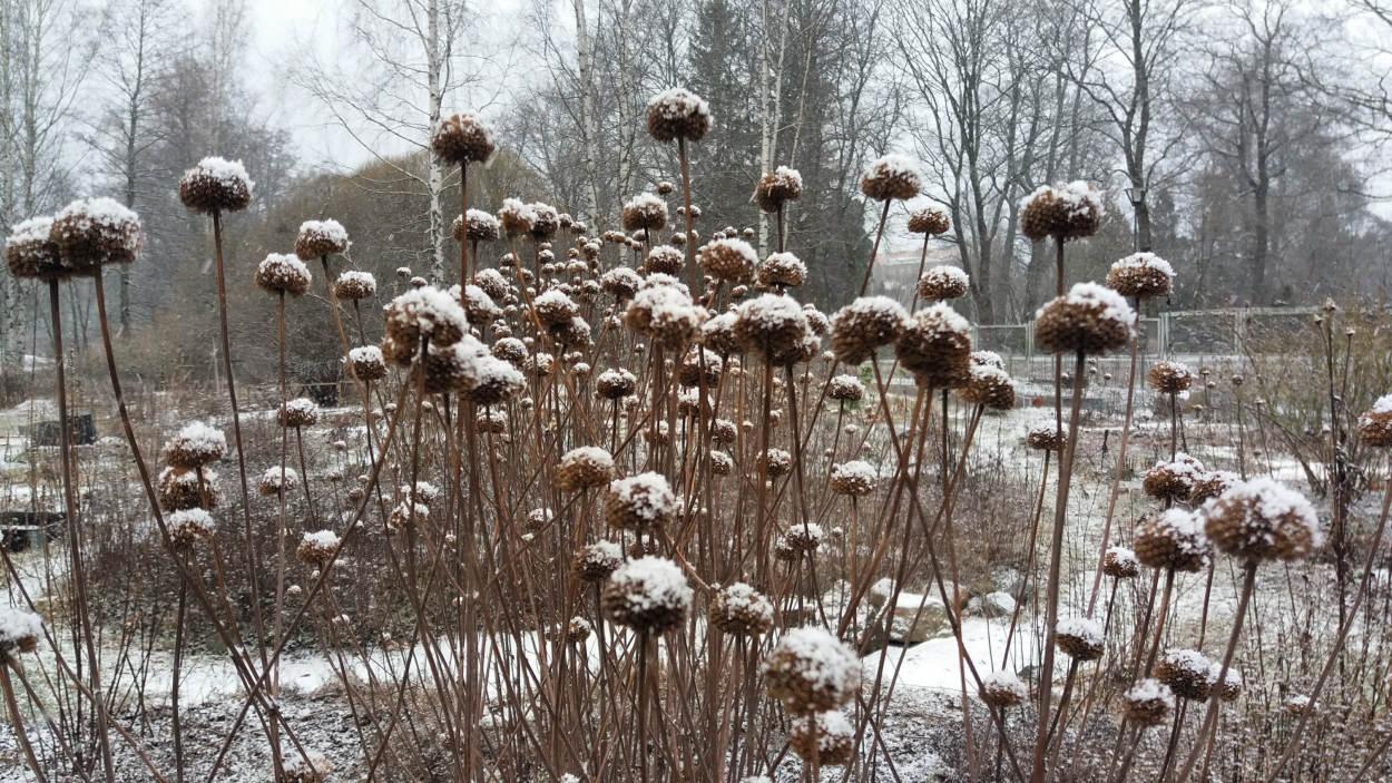 Yrttimaa viehättää talvellakin. Kuva Tiina Taipale
